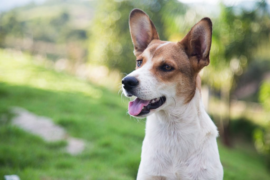 Todos os animais já são castrados, vacinados, microchipados e cadastrados no Registro Geral de Animais (RGA).